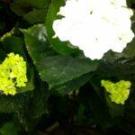 Гортензия куст искусственное растение купить в Барнауле