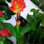 Канна искусственное растение купить в Барнауле