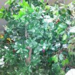 Шефлерас искусственное растение купить в Барнауле
