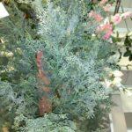 Туя искусственное растение купить в Барнауле