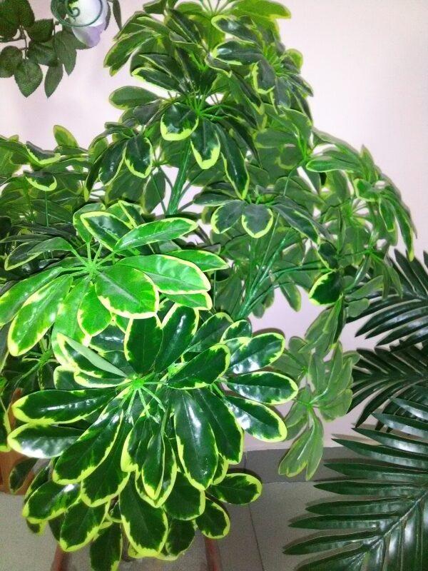 Шефлера искусственное растение купить в Барнауле
