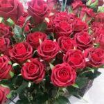 Роза один бутон 70см-бордовая купить в Барнауле